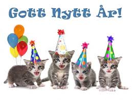 kattungar som fått nyårshattar